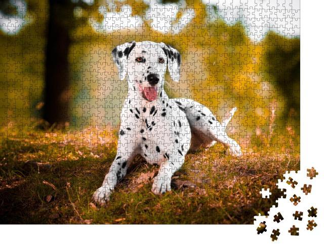 """Puzzle 1000 Teile """"Dalmatiner im Gras, schwarzer und weißer Hund"""""""