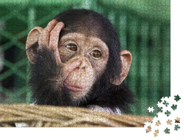 """Puzzle 1000 Teile """"Ein kleiner Schimpanse"""""""