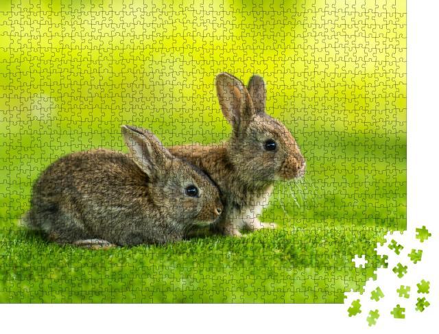 """Puzzle 1000 Teile """"Zwei kleine Kaninchen auf der grünen Wiese"""""""
