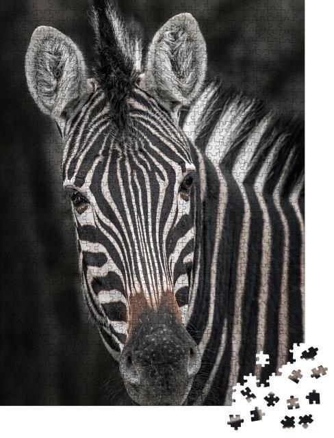 "Puzzle 1000 Teile ""Nahaufnahme eines Zebras"""