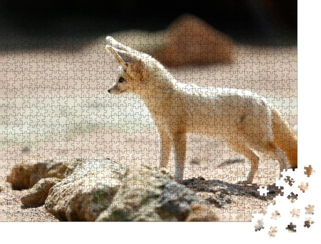 """Puzzle 1000 Teile """"Der Fennek-Fuchs, auch bekannt als Wüstenfuchs"""""""