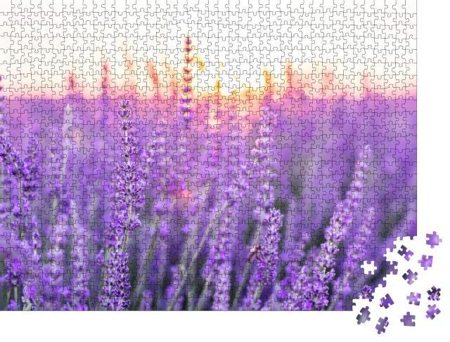 """Puzzle 1000 Teile """"Sonnenuntergang über einem violetten Lavendelfeld, Provence, Frankreich"""""""