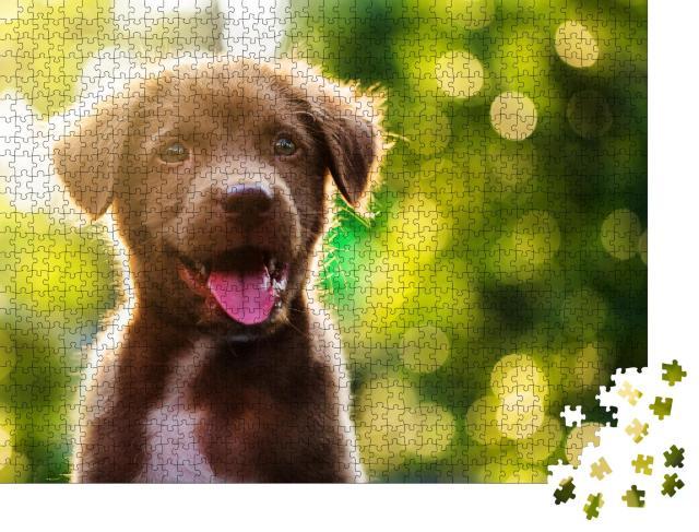 """Puzzle 1000 Teile """"Labrador Retriever Welpe im Sonnenschein"""""""
