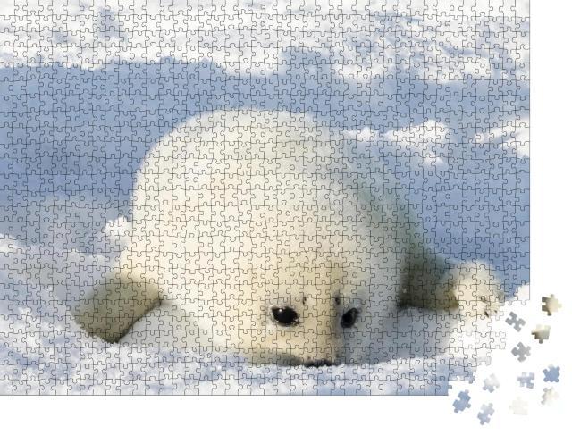 """Puzzle 1000 Teile """"Neugeborene, flauschig-weiße Robbe"""""""