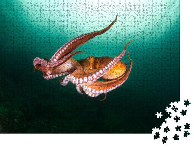 """Puzzle 1000 Teile """"Flug der Tintenfische in der Tiefsee, türkisfarbenes Meer"""""""