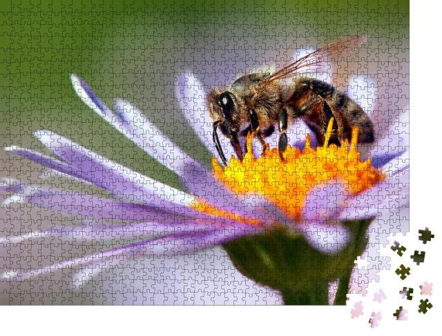 """Puzzle 1000 Teile """"Detailaufnahme: Honigbiene auf einer Blüte"""""""