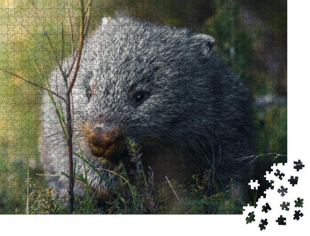 """Puzzle 1000 Teile """"Wombat auf seinem Snack-Run"""""""