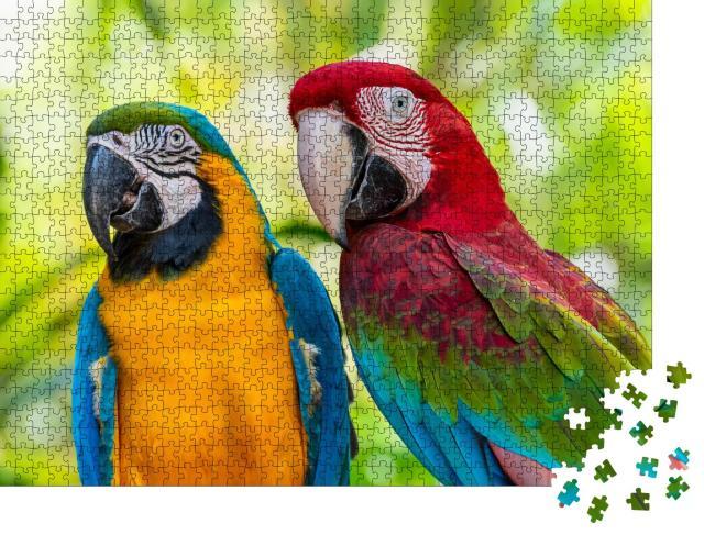"Puzzle 1000 Teile ""Bunte Vögel: Papagei, Aras, Nahaufnahme"""