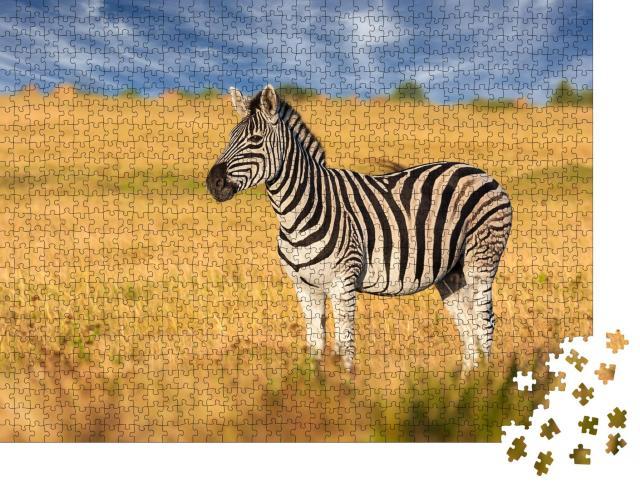 """Puzzle 1000 Teile """"Aufmerksames Zebra in der Savanne"""""""
