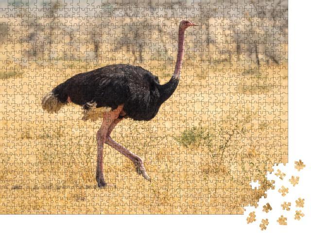 """Puzzle 1000 Teile """"Straußenwanderung, Safari, Steppe in Afrika"""""""