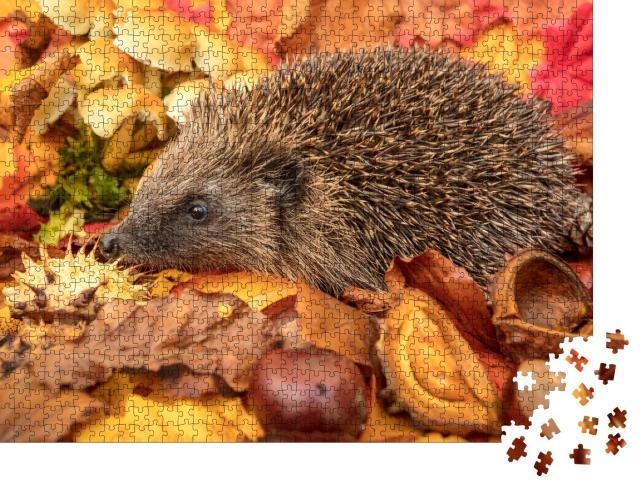 """Puzzle 1000 Teile """"Igel im Herbst mit Kastanien und buntem Herbstlaub"""""""