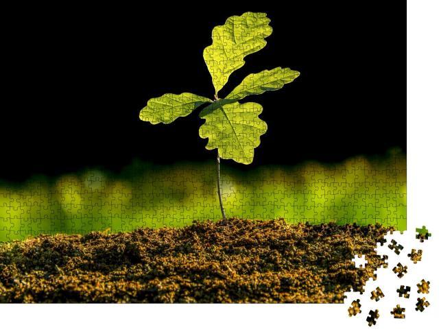 """Puzzle 1000 Teile """"Kleine Eichenpflanze wächst im Garten, Setzling"""""""