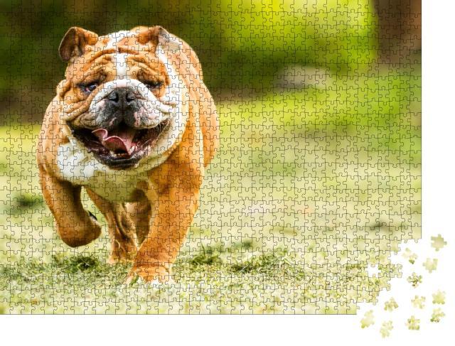 """Puzzle 1000 Teile """"Bulldogge auf einer Wiese"""""""