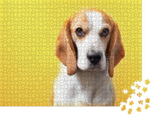 """Puzzle 1000 Teile """"Porträt eines süßen, liebenswerten Beagles"""""""