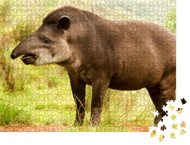"""Puzzle 1000 Teile """"Südamerikanischer Tapir im Wald, ecuadorianisches Hochland"""""""