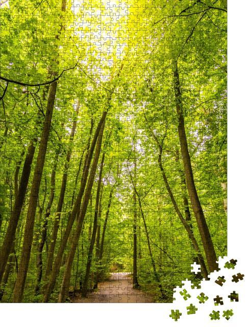 """Puzzle 1000 Teile """"Wanderweg in den Buchenwäldern des Nationalparks Hainich, Deutschland"""""""