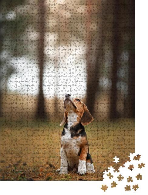 """Puzzle 1000 Teile """"Hund läuft durch die Natur, Beagle, Haustier"""""""
