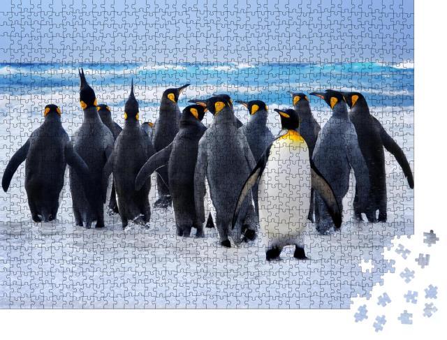 """Puzzle 1000 Teile """"Königspinguine auf dem Weg zum Wasser auf den Falklandinseln"""""""