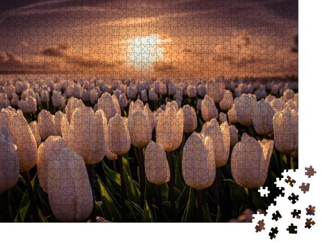 """Puzzle 1000 Teile """"Sonnenuntergang auf dem Tulpenfeld Noordoostpolder in den Niederlanden"""""""