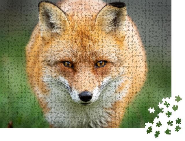 """Puzzle 1000 Teile """"Rotfuchs auf der Jagd"""""""