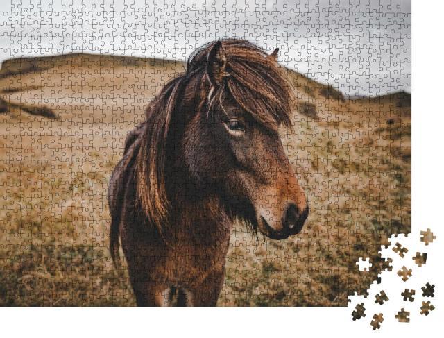 """Puzzle 1000 Teile """"Wunderschönes Island-Pferd in Nahaufnahme"""""""
