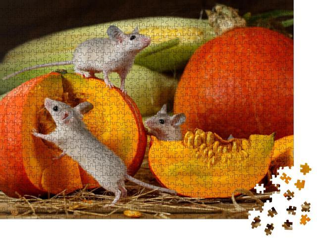 """Puzzle 1000 Teile """"Drei junge Mäuse erkunden geerntete Kürbisse"""""""