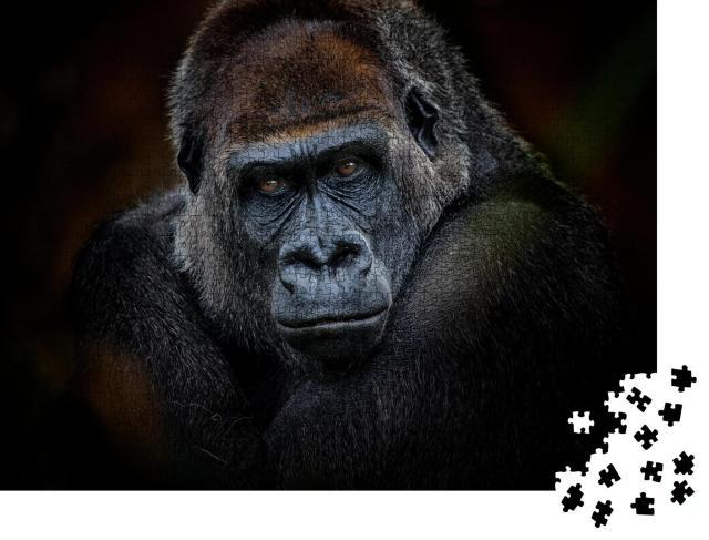 """Puzzle 1000 Teile """"Porträt eines Gorillas mit dunklem Hintergrund"""""""