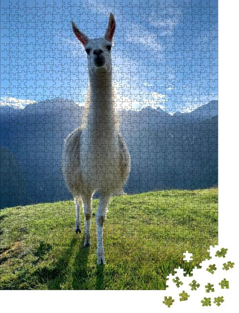 "Puzzle 1000 Teile ""Weißes Lama in den Anden, Peru"""