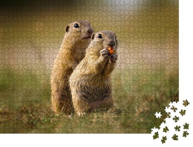 """Puzzle 1000 Teile """"Naturaufnahme: niedliche Erdhörnchen"""""""