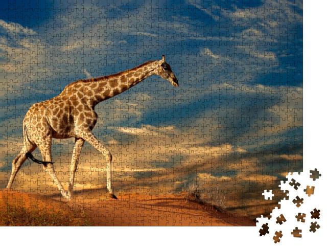 """Puzzle 1000 Teile """"Giraffe auf einer Sanddüne in Südafrika"""""""
