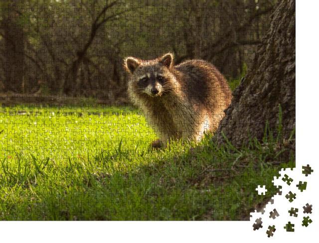 """Puzzle 1000 Teile """"Kleiner Waschbär schaut neugierig hinter einem Baum hervor"""""""