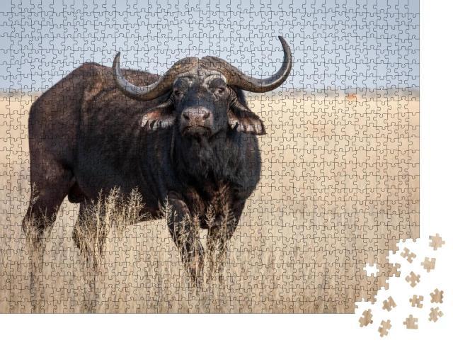 """Puzzle 1000 Teile """"Ein großer alter Kap-Büffel-Bulle auf einer Grasebene"""""""