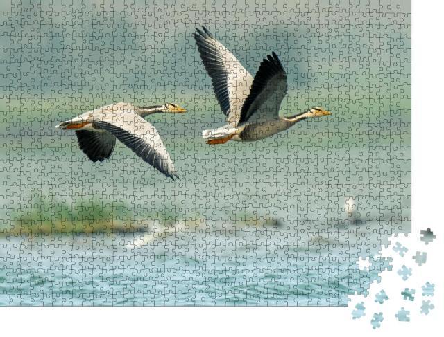 """Puzzle 1000 Teile """"Blässgänse über den Seen von Bhigwan, Indien"""""""