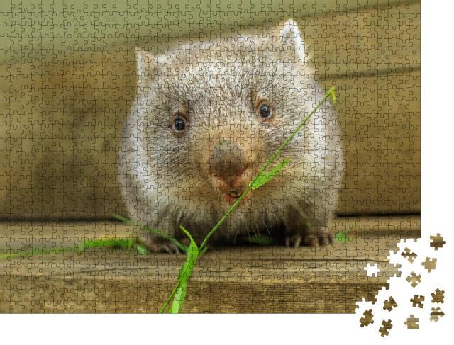 """Puzzle 1000 Teile """"Niedliches Wombat-Jungtier bei der Nahrungsaufnahme"""""""