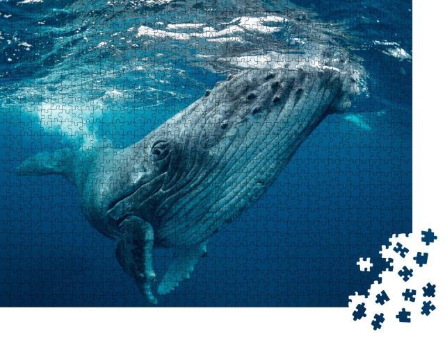 "Puzzle 1000 Teile ""Wale, Tonga"""