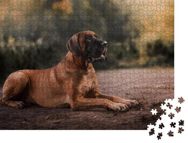 """Puzzle 1000 Teile """"Hund: Deutsche Dogge"""""""