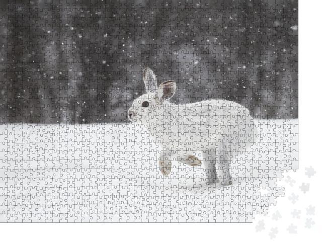 """Puzzle 1000 Teile """"Weißer Schneehase im kanadischen Winter"""""""