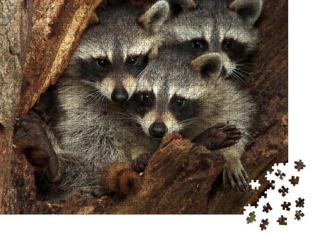 """Puzzle 1000 Teile """"Drei kuschelige Waschbären in einer Baumhöhle"""""""