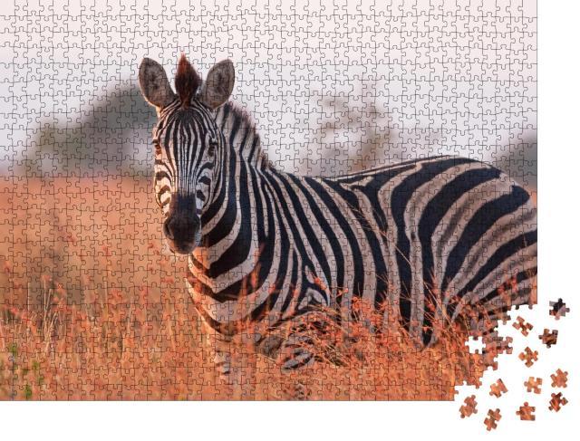 "Puzzle 1000 Teile ""Ein Steppenzebra: Equus quagga am Kruger-Nationalpark in Südafrika"""