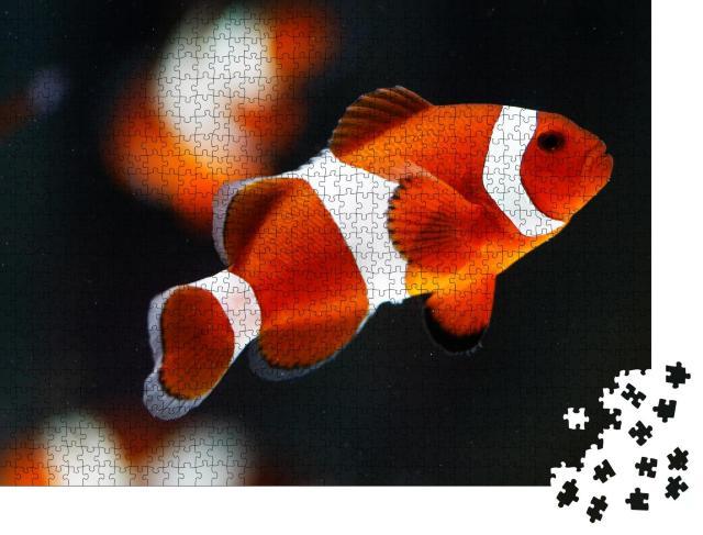 """Puzzle 1000 Teile """"Falscher Percala-Anemonenfisch oder Ocellaris-Anemonenfisch"""""""
