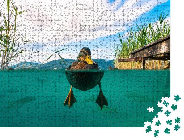 """Puzzle 1000 Teile """"Unterwasserbild einer Ente und mit einigen Fischen in einem See, Österreich"""""""