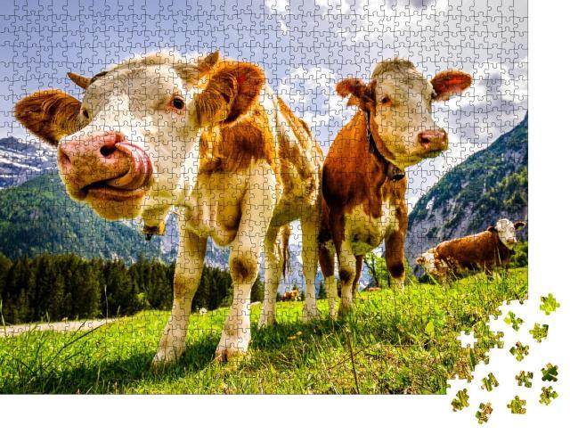 """Puzzle 1000 Teile """"Neugierige Kühe auf der Eng Alm in Österreich"""""""