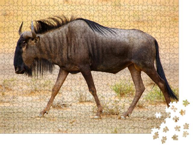 """Puzzle 1000 Teile """"Streifengnu in der Kalahari-Wüste"""""""