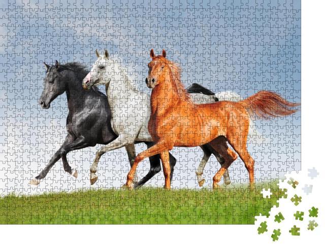 """Puzzle 1000 Teile """"Drei Araber-Pferde"""""""