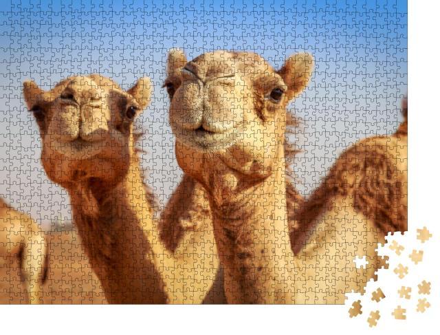 """Puzzle 1000 Teile """"Freilebende Kamele in Arabien"""""""