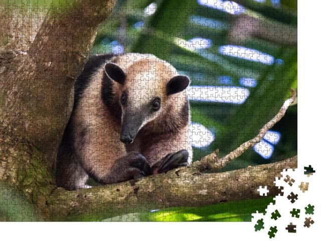 "Puzzle 1000 Teile ""Baumameisenbär, Costa Rica"""