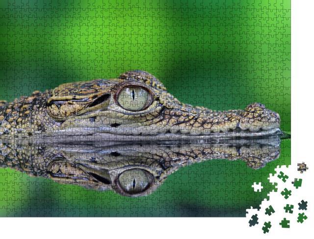 """Puzzle 1000 Teile """"Krokodil mit Spiegelung"""""""