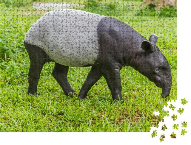 """Puzzle 1000 Teile """"Tapir, Säugetier, das sich von großen Pflanzen ernährt"""""""
