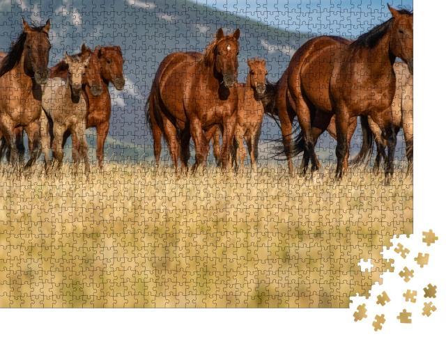 """Puzzle 1000 Teile """"Quarter Horse-Herde auf einer Grasebene vor den Pryor Mountains, Montana"""""""