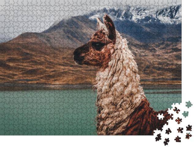 "Puzzle 1000 Teile ""Lama an der Laguna Tuni in Bolivien"""